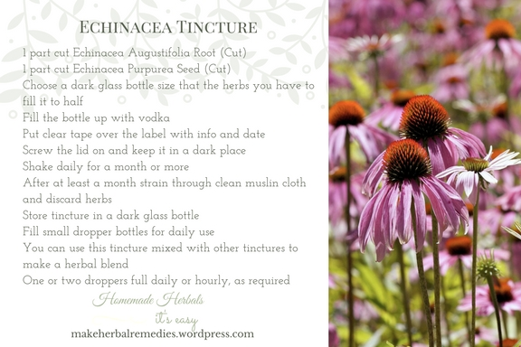 make-herbal-remedies-echinacea-tincture