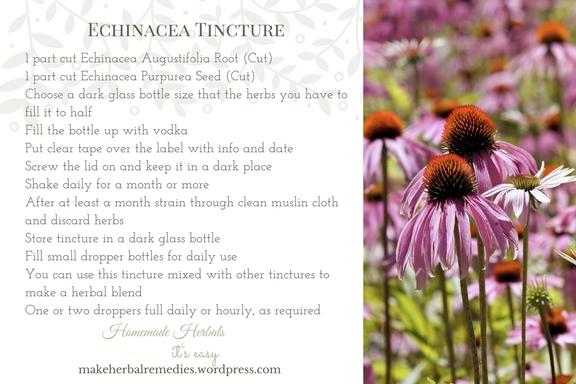 make-herbal-remedies-echinacea-tincture