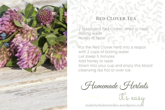 make-herbal-remedies-recipe-red-clover-tea