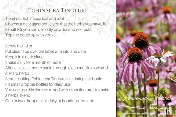 Homemade Herbals Recipe Echinacea Tincture .jpg