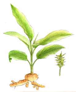 turmeric-homemade herbals
